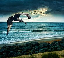 FLIGHT by vincentphoto