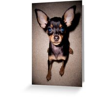 mini pinscher Greeting Card