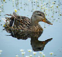 Duck Reflection by Jo Nijenhuis