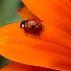 all kinds of orange by Nicole W.