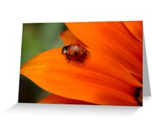 all kinds of orange Greeting Card