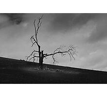 Sentinel Photographic Print