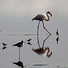 Lake reflections  - water birds on  Lake Nadutu Serengeti Tanzania  by john  Lenagan