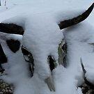 Longhorn Freezie Redux by WildestArt