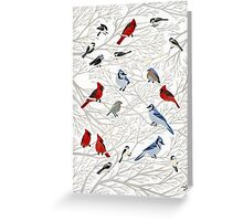 Winter Birds Greeting Card