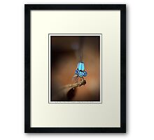 Blue Wonder Framed Print
