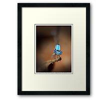 Blue Wonder Framed Print