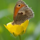 Small Heath by Gill Langridge