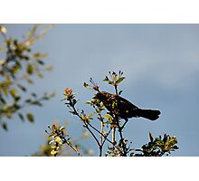 Funny Speckled  Bird Photographic Print