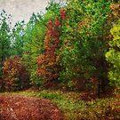 Early Autumn by Ginger  Barritt