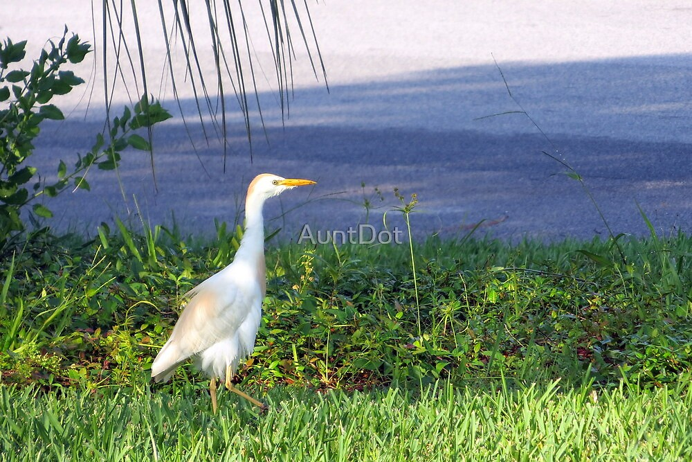 Visiting Egret by AuntDot