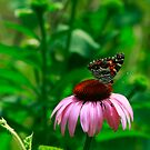 The Lady and the Cone Flower by Brenda Burnett