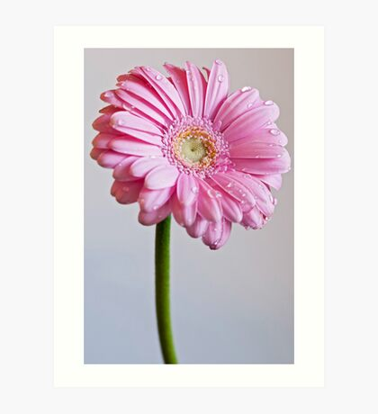 Flower with dew drops Art Print