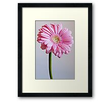 Flower with dew drops Framed Print