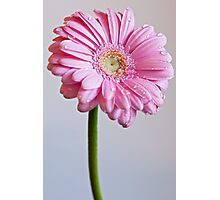 Flower with dew drops Photographic Print