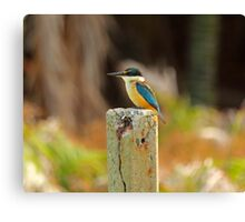 Scared Kingfisher Canvas Print