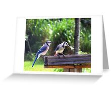 Backyard Blue Jays 'Jay birds' in Florida Greeting Card