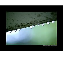 Spring Raindrops - Middle Island, New York  Photographic Print