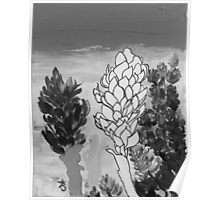 Alpinia purpurata – Red Ginger Flower - Black and White Greyscale Poster