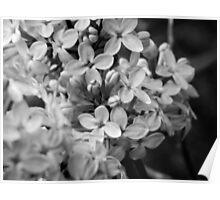 Night Flowers III Poster