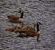 Goose family by vigor