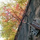 Sixth Street Embankment, Abandoned Pennsylvania Railroad Embankment , Jersey City, New Jersey  by lenspiro
