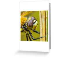 Four-spotted Chaser close-up. Greeting Card