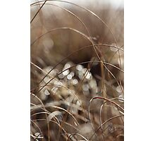 Pure Morning Photographic Print