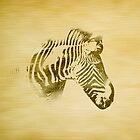 Zebra by Winterrr