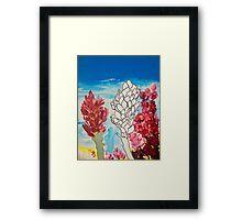 Alpinia purpurata – Red Ginger Flower, Nature in Bogota, Colombia  Framed Print