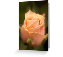 Emerging beauty Greeting Card