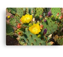 Blooming Cactuses Cactaceae Opuntia Canvas Print