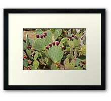 Cactuses Cactaceae Opuntia with fruits Framed Print