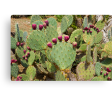 Cactuses Cactaceae Opuntia with fruits Canvas Print