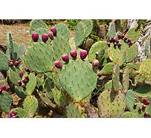 Cactuses Cactaceae Opuntia with fruits Photographic Print
