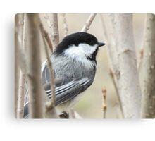 Bird - British Columbia Canada Canvas Print