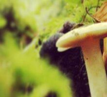 Mushroom Hazelwood Sticker