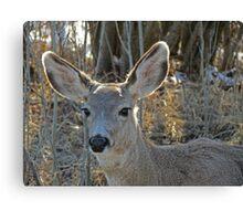 Deer - British Columbia Canada Canvas Print
