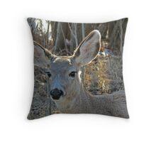 Deer - British Columbia Canada Throw Pillow