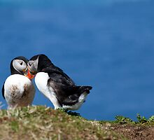 Puffin Love in the Treshnish Isles - Scotland by Christy Woodrow