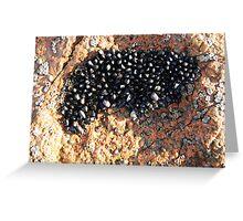 Freycinet Mussell Shells Greeting Card