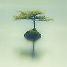 Fairy Lake Fir by Carrie Cole