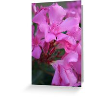 Pink Oleander Flower Greeting Card