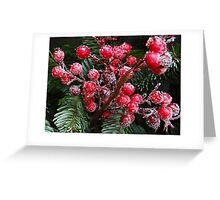 Christmas card with Christmas berries in snow Greeting Card