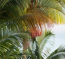 Palms: Hilo, Hawai'i by Sally Robinson