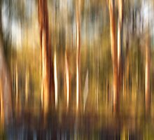 Spirited Gum Trees by Peter Evans