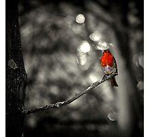 Robin (Selective colouring) Photographic Print