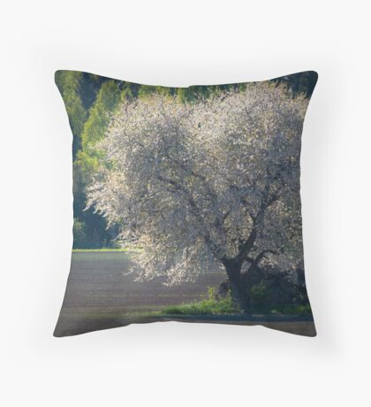 Cherry tree in spring Throw Pillow