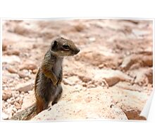 Cute Chipmunk or Wild Rodent Poster