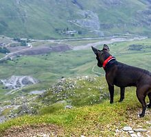 Dog On High by Jamie  Green